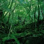 「もののけ」の森