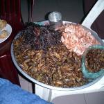 こんな、虫料理もあります